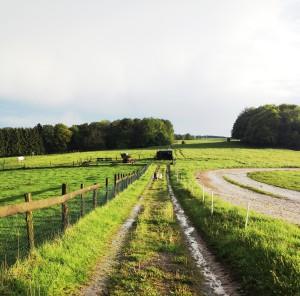 Blick über das Gelände Gut Holmecke