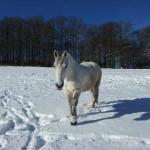 UNIVITA - Gut Holmecke - Winterkur_Pferdekoppel