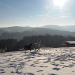 Gut Holmecke Univita im Winter - Die Pferdekoppel