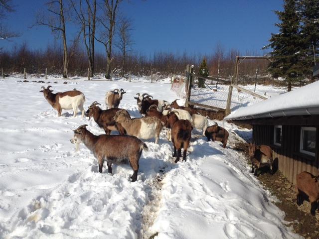 Gartenmobel Eisen Weiss : In welcher Klinik macht man am besten eine Winterkur?