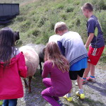 Die Kinder bei den Schafen auf Gut Holmecke