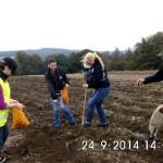 UNIVITA Jugendhilfe: Kartoffeln ernten macht Spaß