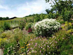 Der Kräutergarten von Gut Holmecke