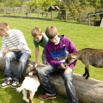 UNIVITA Kinder bei den Ziegen
