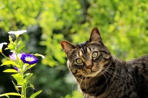 cat-1706757_1920