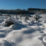 Schneediamanten_Bild von Tabea Hettler