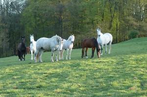 Die Pferdeherde auf Gut Holmecke - Foto von Dorothée Timm