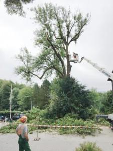 Eschen Gut Holmecke - Vorbereitungsarbeiten für die Fällung